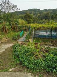 假日農夫 農地出租 開心農場 近省道位於桃園龜山新嶺一街