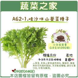 【蔬菜之家】A62-1.哇沙咪山葵菜種子0.9克(約390顆)