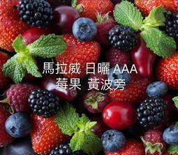 <四季咖啡生豆>馬拉威  [莓果炸彈] 黃波旁日曬AAA 每公斤450元