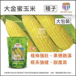 園藝倉庫-大金蜜玉米種子- 體積大,品質好,果穗整齊飽滿。甜度高 大包裝