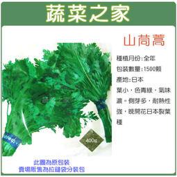 【蔬菜之家】A02.山茼蒿種子1500顆(葉小.色青綠.氣味濃。蔬菜種子)