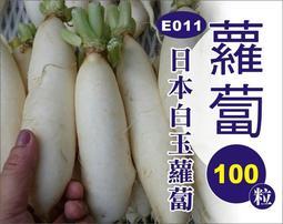 農葉屋E011日本白玉蘿蔔 種子
