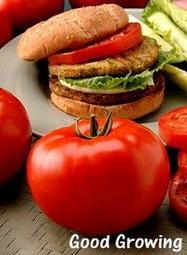 【野菜部屋~蔬菜種子】L09 大牛蕃茄種子10粒 , 果肉多汁 , 肉質Q , 每包12元~