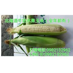 慧軒農場 #免運費 北海道牛奶水果玉米 最新鮮超平價上級品10斤500元(全年種植)