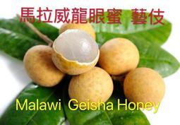 <四季咖啡生豆>馬拉威龍眼紅蜜藝妓(Geisha) AAA等級每公斤550元