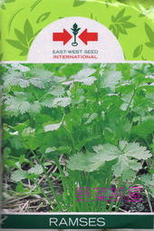 【野菜部屋~蔬菜種子】O09 泰國耐熱香菜種子3.8公克(約300粒) ,泰國進口種子 ,耐熱品種 , 每包12元 ~