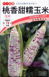【野菜部屋~】N20 桃香甜糯玉米種子3.5公克(約12粒) , 生長強健 , 穗葉青綠 , 有甜度 ,每包12元~